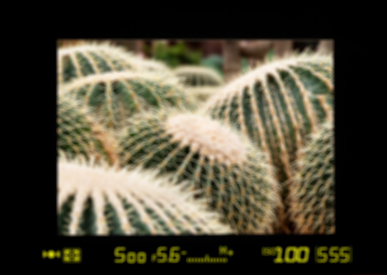 Demonstration of diopter blur photo - Viewfinder Image Blurry? You May Need to Adjust Your Camera's Diopter - Here's How