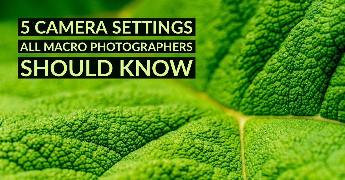 5 Camera Settings That All Macro Photographers Should Know