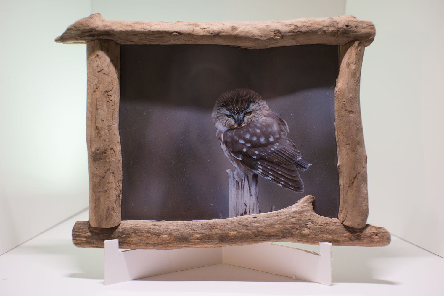 Tips for Photographing Artwork for Marketing Purposes - photo of an owl in a rustic wood frame