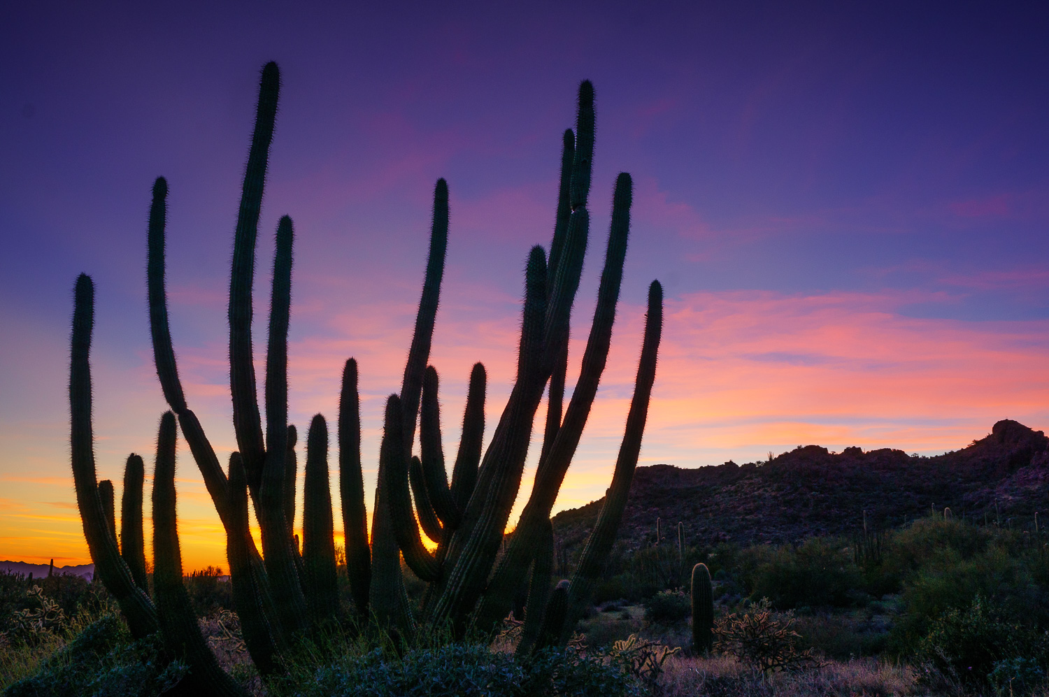 Organ Pipe Cactus by Anne McKinnell - Beginner's Guide to Natural Light in Landscape Photography