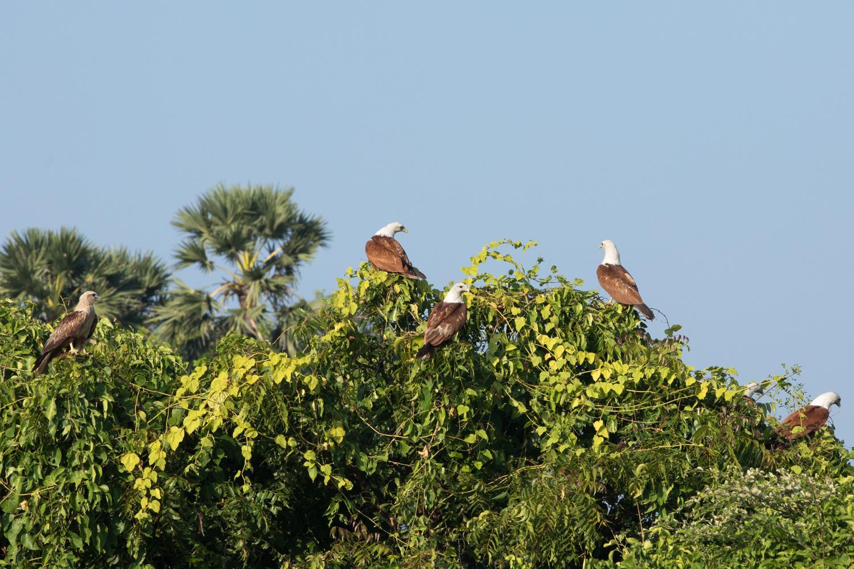 Wildlife photo tips 08