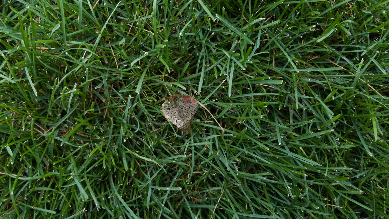 leaf on grass - Mobile Phones Versus DSLRs