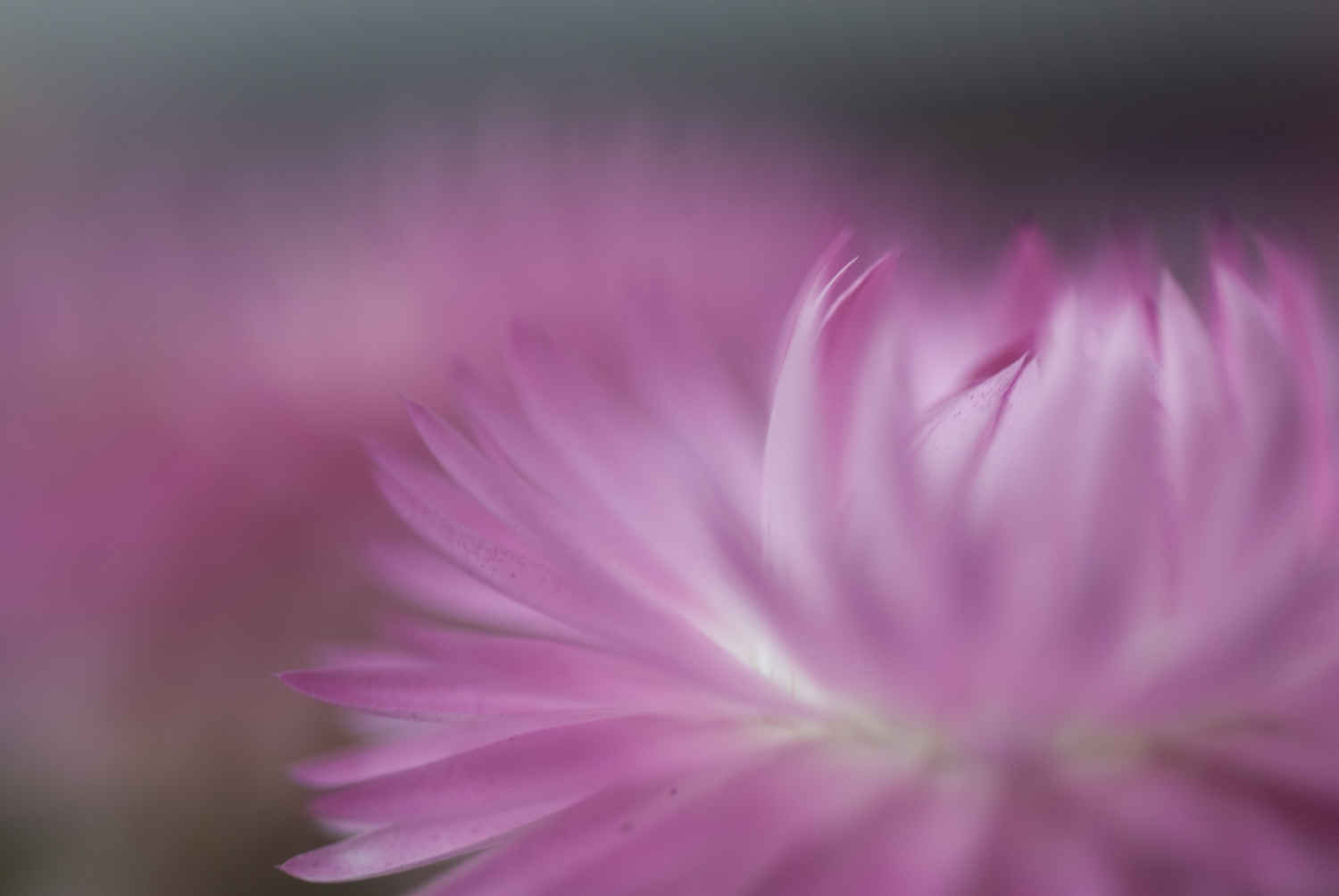 5 Things I Wish I'd Known Before Starting Nature Photography - flower extreme close up