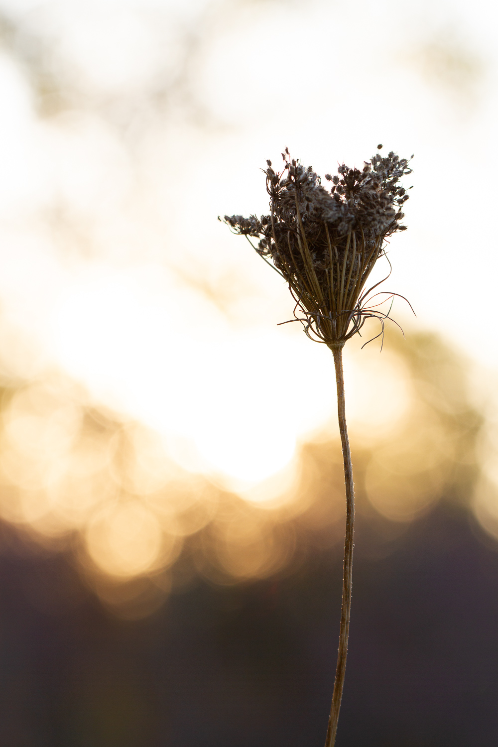 silhouette and bokeh of a flower - How to Use Backlight to Create Incredible Images