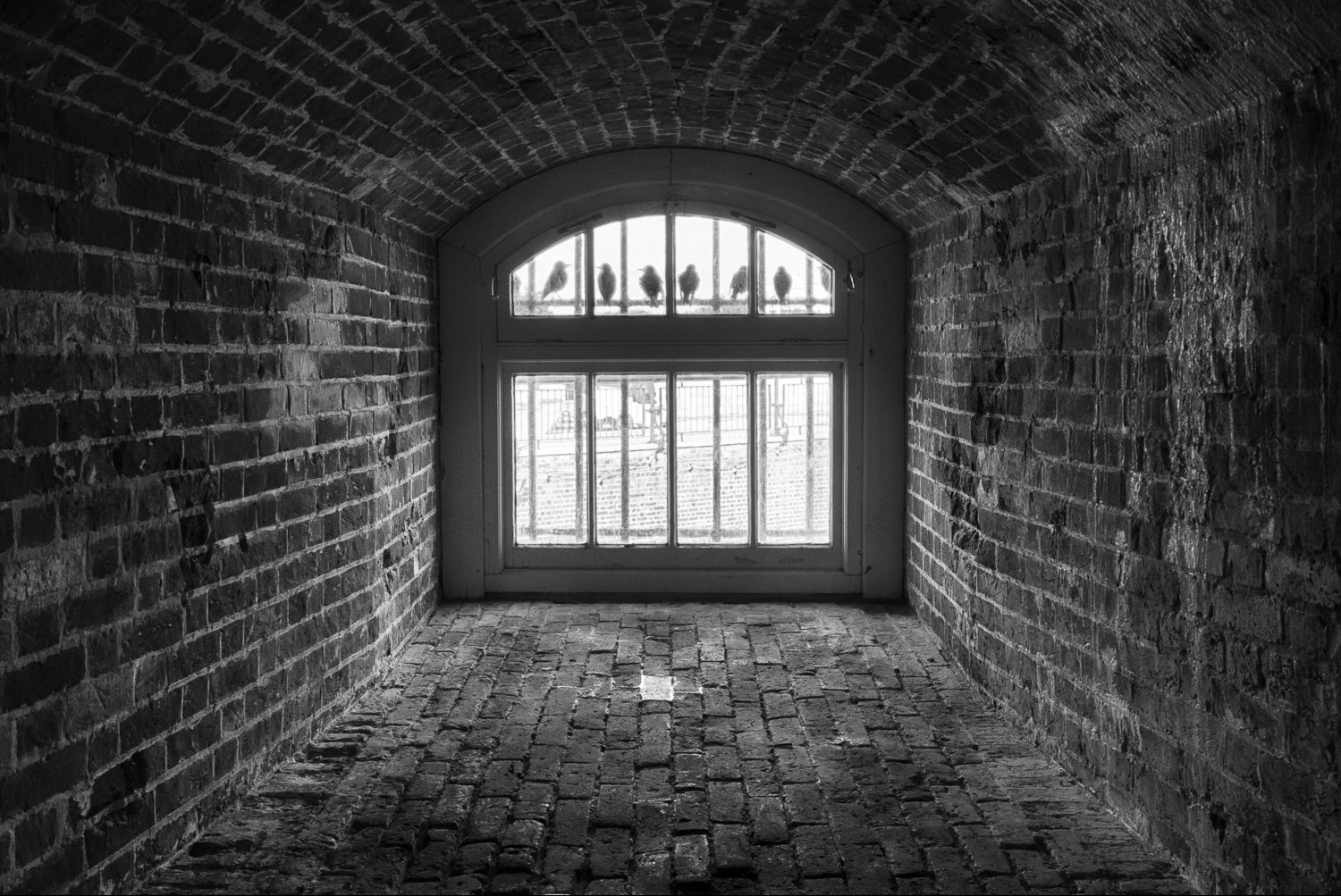 brick wall with birds in a window - Composition Tips for Drawing the Viewer's Eye Through Your Photographs
