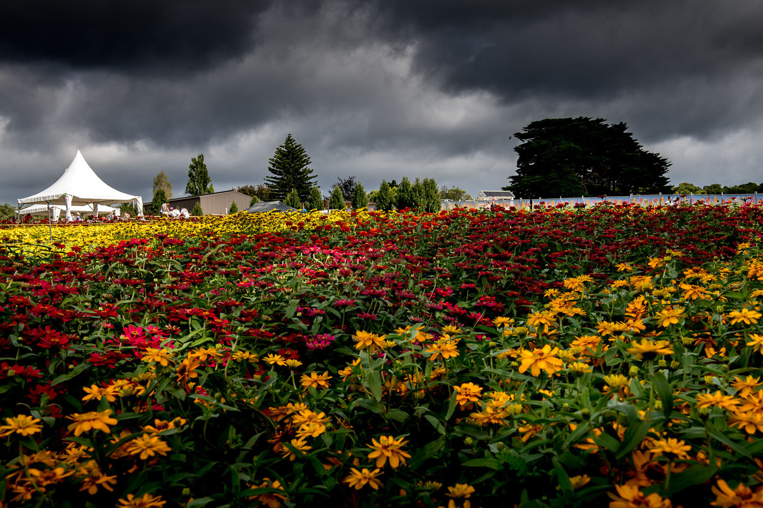 flower garden - time-lapse photography