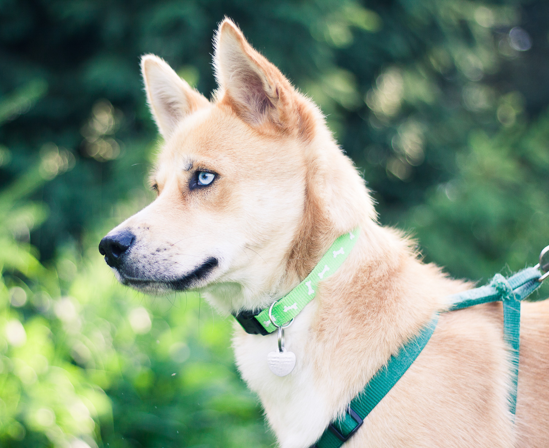 husky dog - Creative Pet Photography