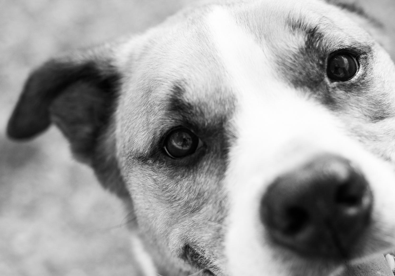 cute dog - 5 Ways to Make Extraordinary Photographs of Ordinary Subjects