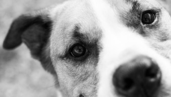 Five Tips for Creative Pet Photography