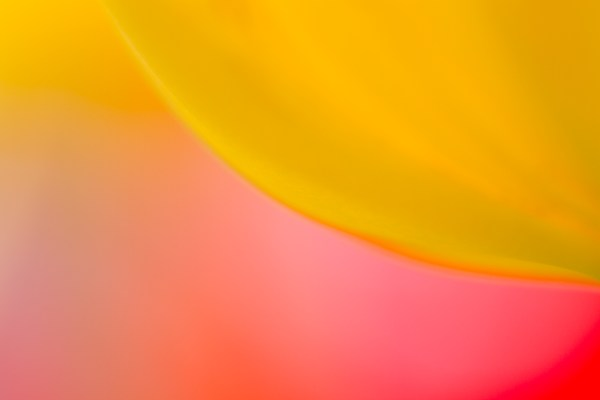 A Beginner's Guide to Abstract Flower Photography