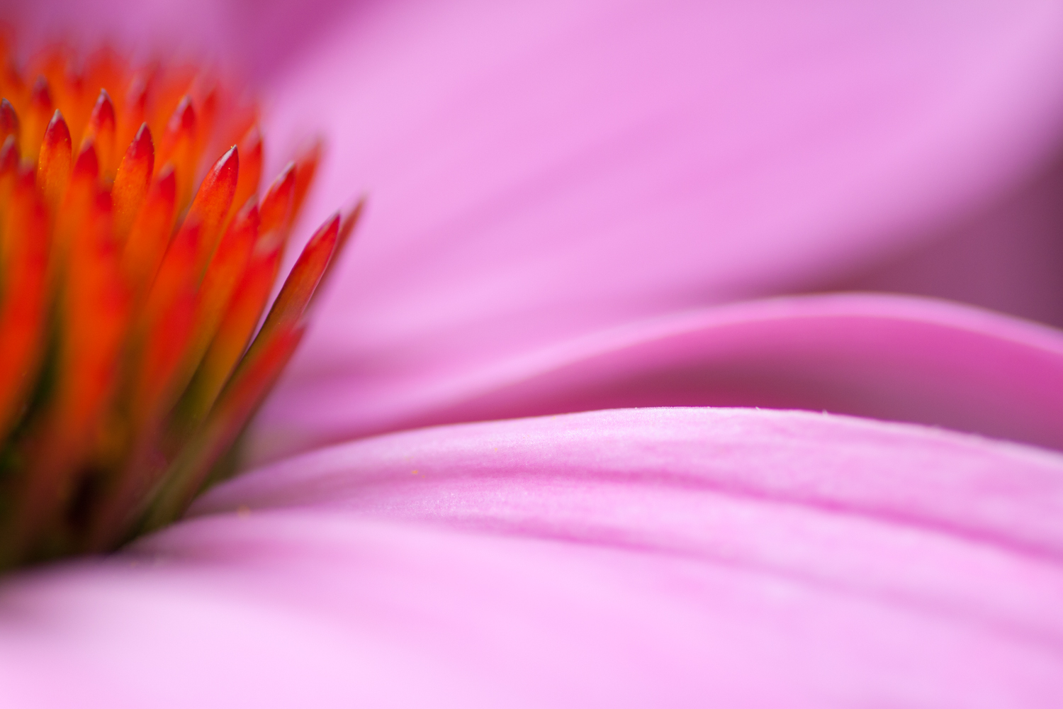 abstract flower photography coneflower