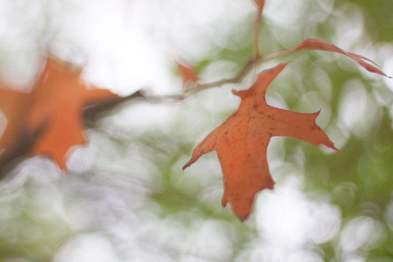 natural light macro fall leaves