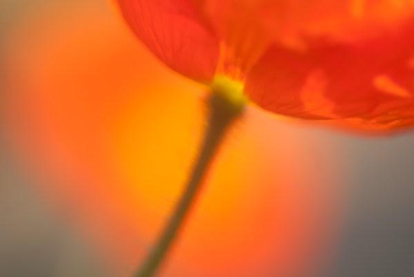 Weekly Photography Challenge – Orange