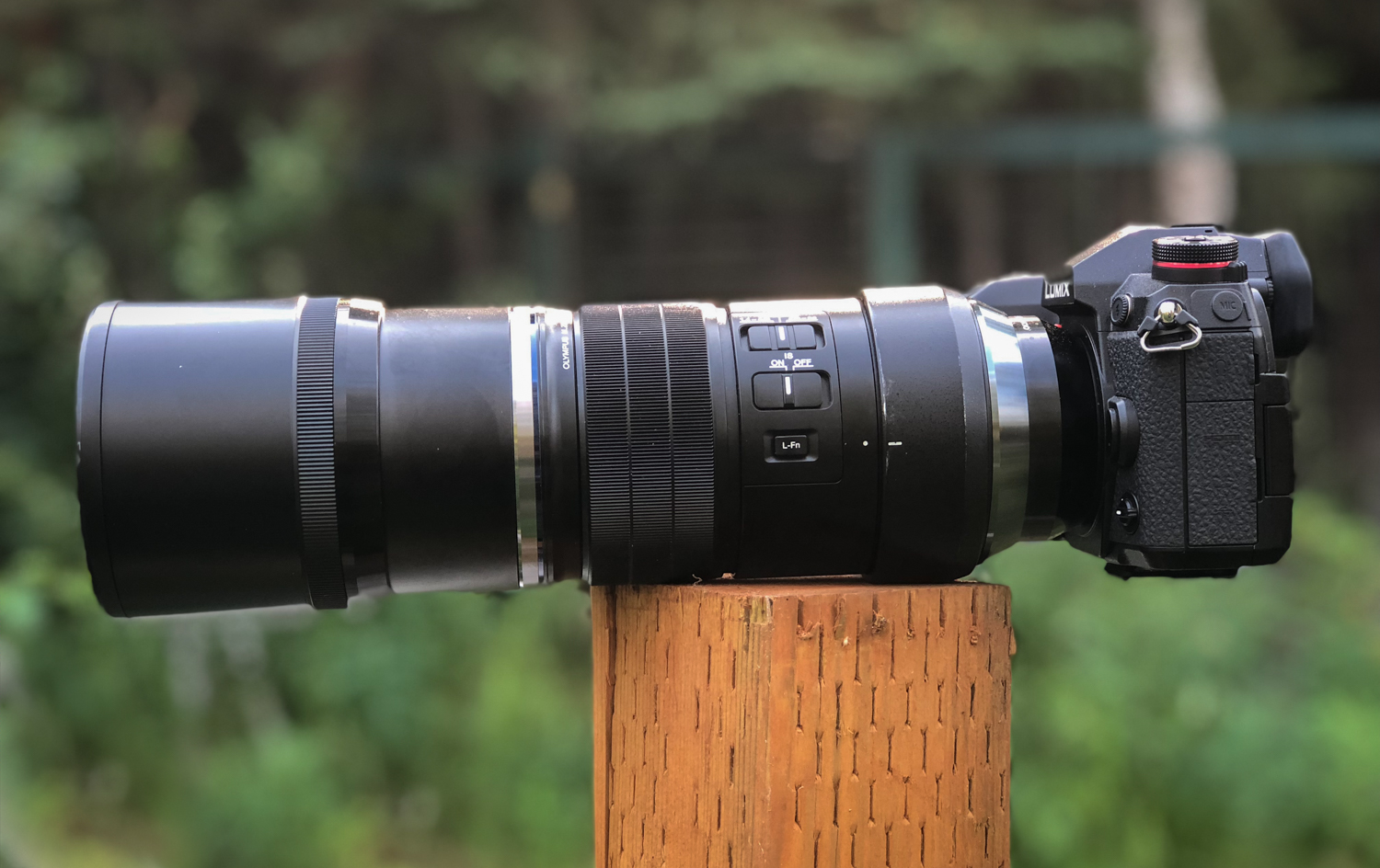 Review of the Olympus 300mm F4 PRO Lens