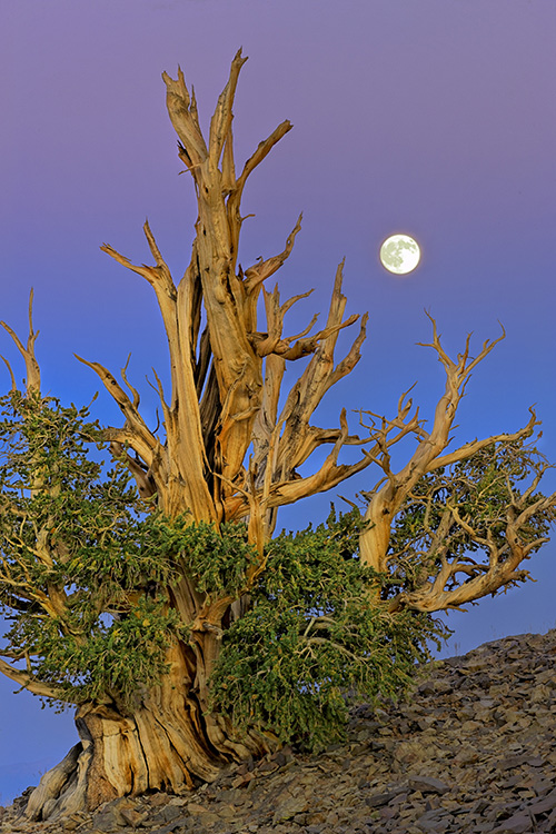 Bristlecone moon - Making the Best Use of HDR in Landscape Photography