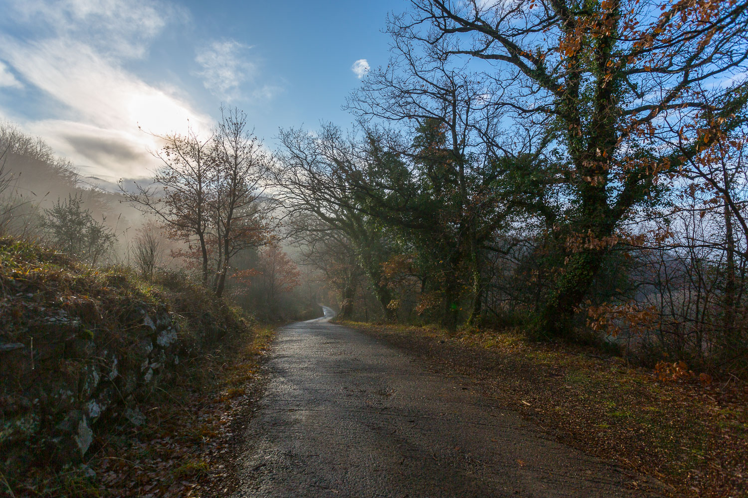 road in the trees - How to Break the World Down into Elements to Create Better Photos
