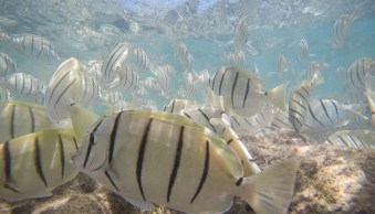 Underwater photography with a GoPro