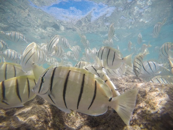 5 Tips for Underwater Photography with a GoPro
