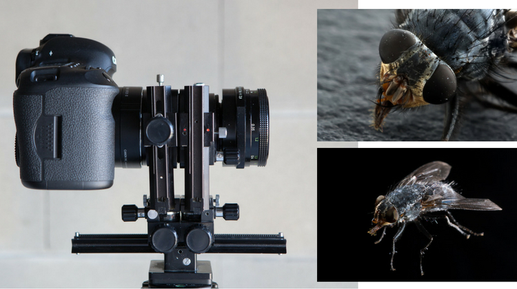How to do Extreme Close-Up Photography with a Macro Bellows