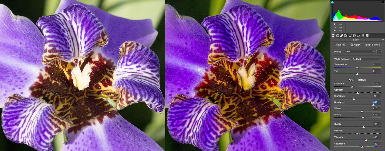 Emperor Purple Iris CameraRaw