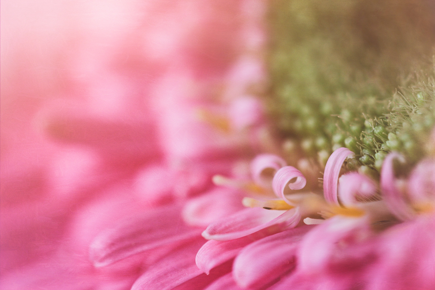 Why Your Camera Gear Doesn't Matter - pink flower