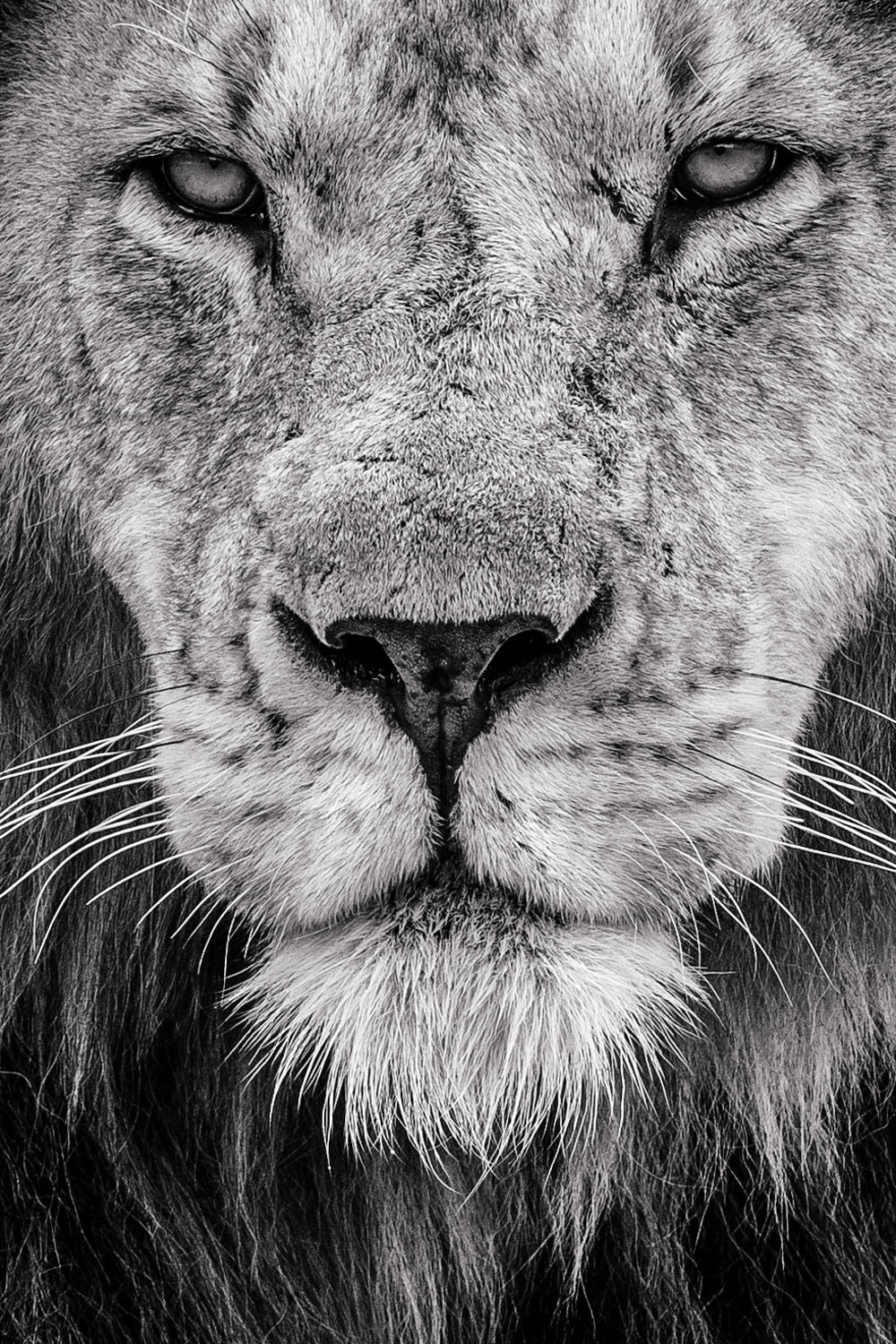 https://i2.wp.com/digital-photography-school.com/wp-content/uploads/2018/09/andrew-sproule-photography-pride-male-lion-masai-mara.jpg?resize=1000%2C1500&ssl=1