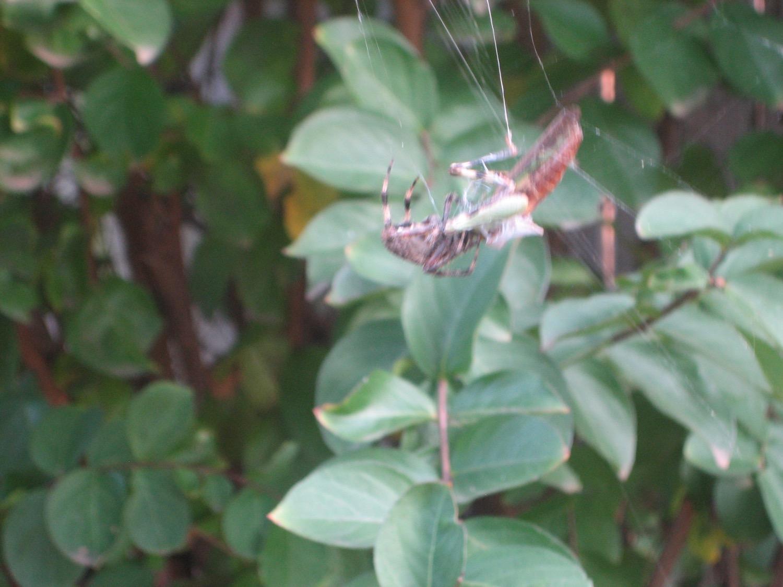 如何让孩子对摄影感兴趣 - 蜘蛛吃蚱蜢