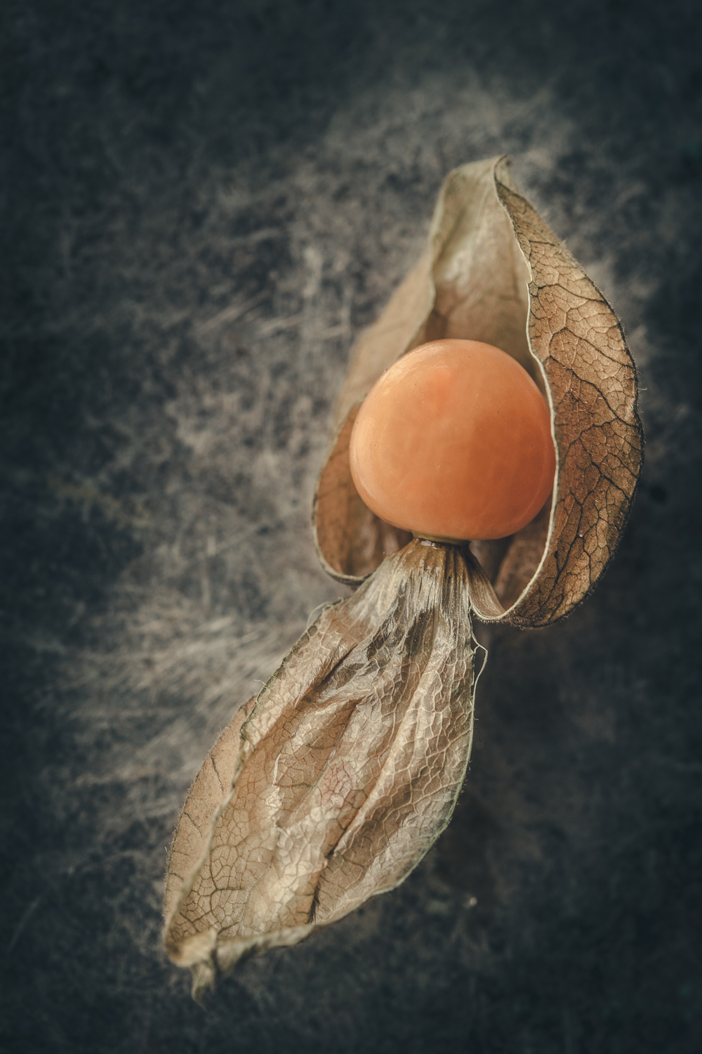 Physalis - How to Create Fine Art Images from the Mundane