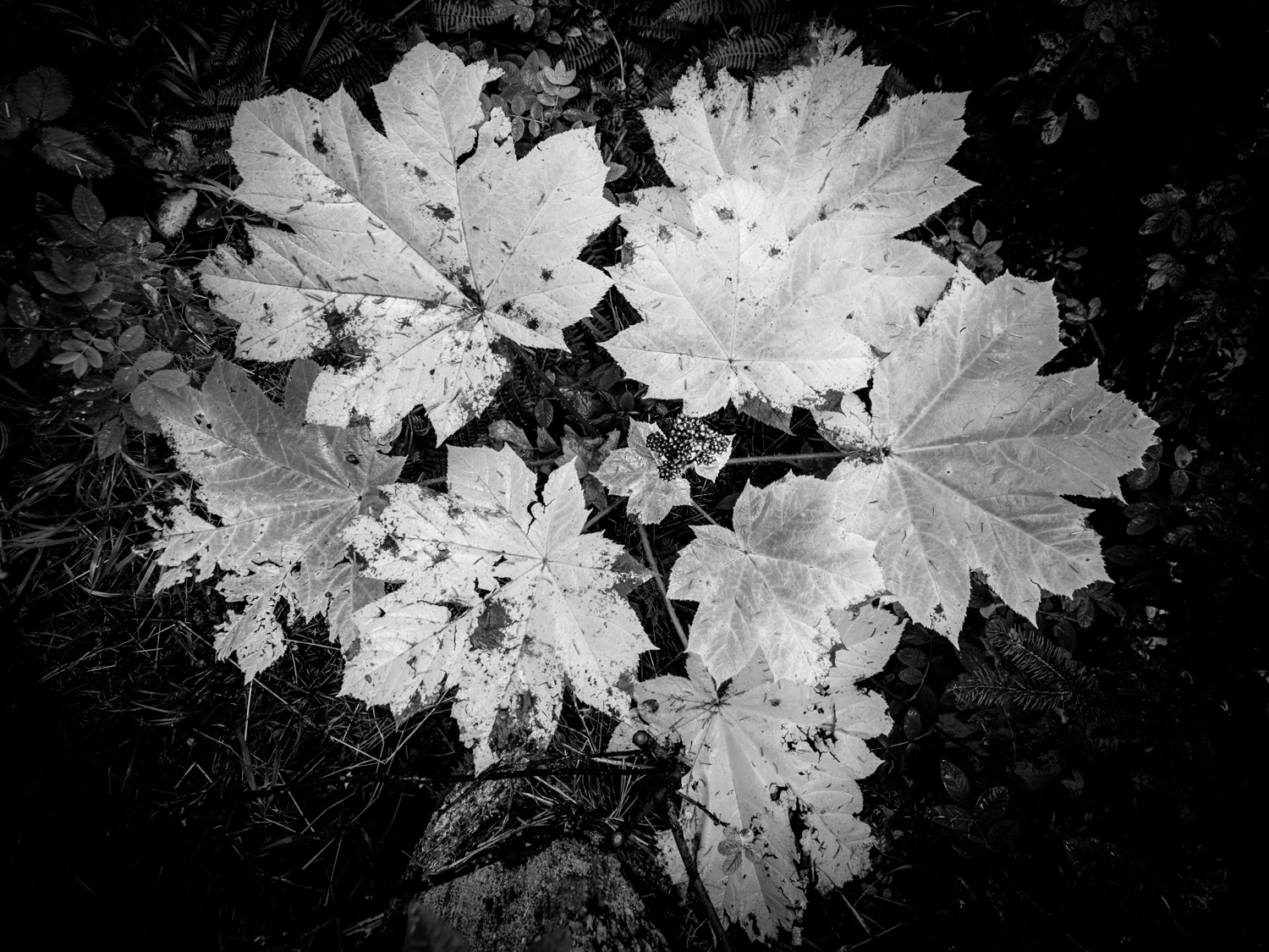 6 - Black and White in the Outdoors