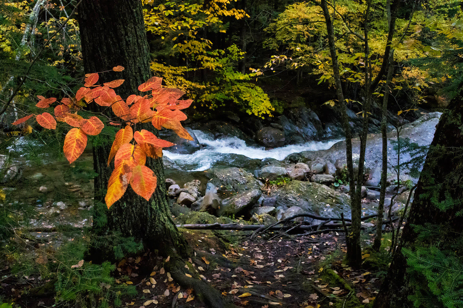 https://i2.wp.com/digital-photography-school.com/wp-content/uploads/2018/11/FallFoliage_FilterDPS1.jpg?resize=1500%2C1000&ssl=1