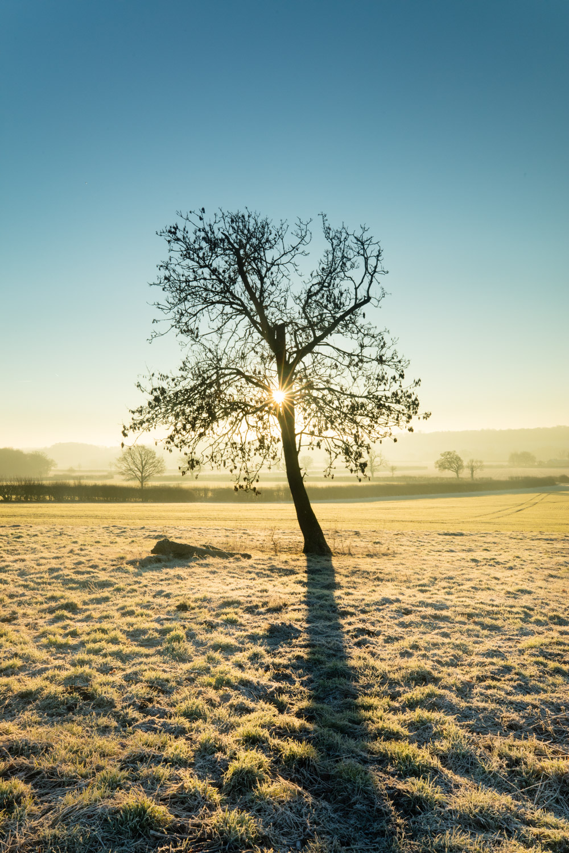 Image: Frosty sunrise, Kings Sutton, Oxfordshire, England