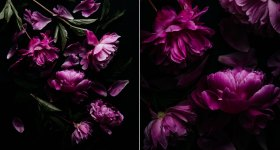 How to apply compositional theory to still life photography