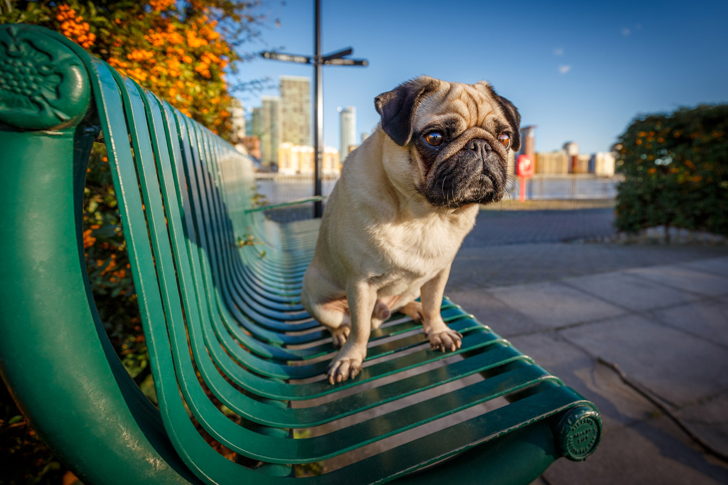4 of the Best Lenses for Creative Dog Photography 4