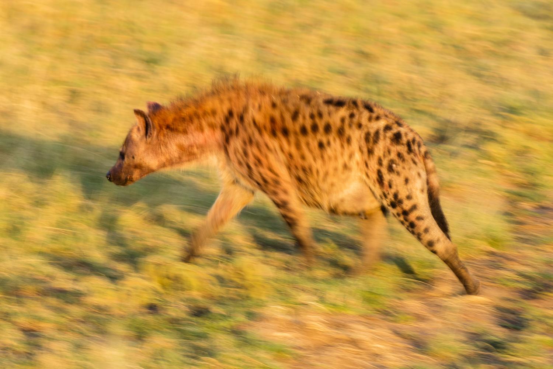 Image: Hyena Pan, Tanzania © Jeremy Flint