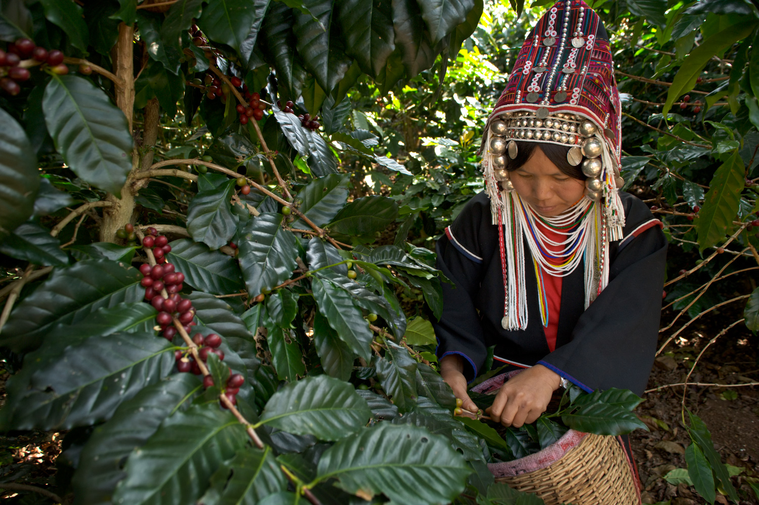 Akha Coffee Harvest 7 Different Situations Where You Can Use Fill Flash Effectively