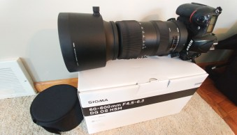 Sigma 60-600, Review, Lens, Wildlife Photography