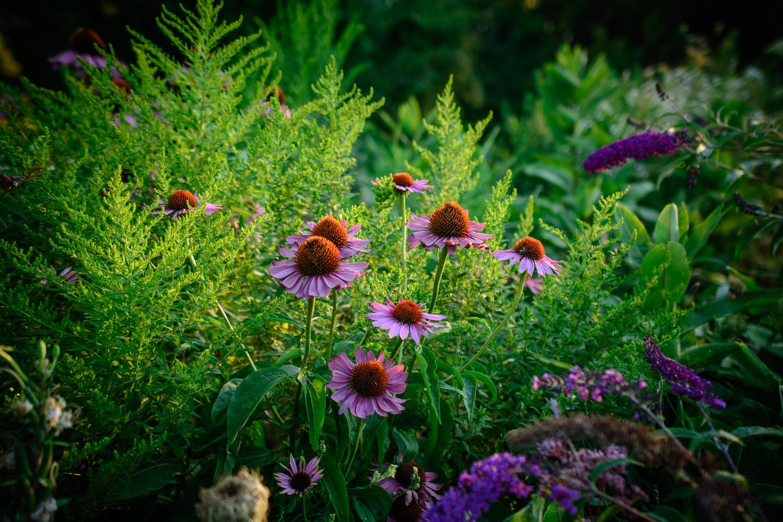 图片:当我第一次拿到相机时,我会拍摄鲜花照片。我从未对照片感到满意......