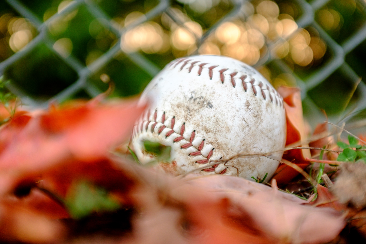 Image: I played baseball as a kid and feel nostalgic about it every autumn. One year I took a beat u...