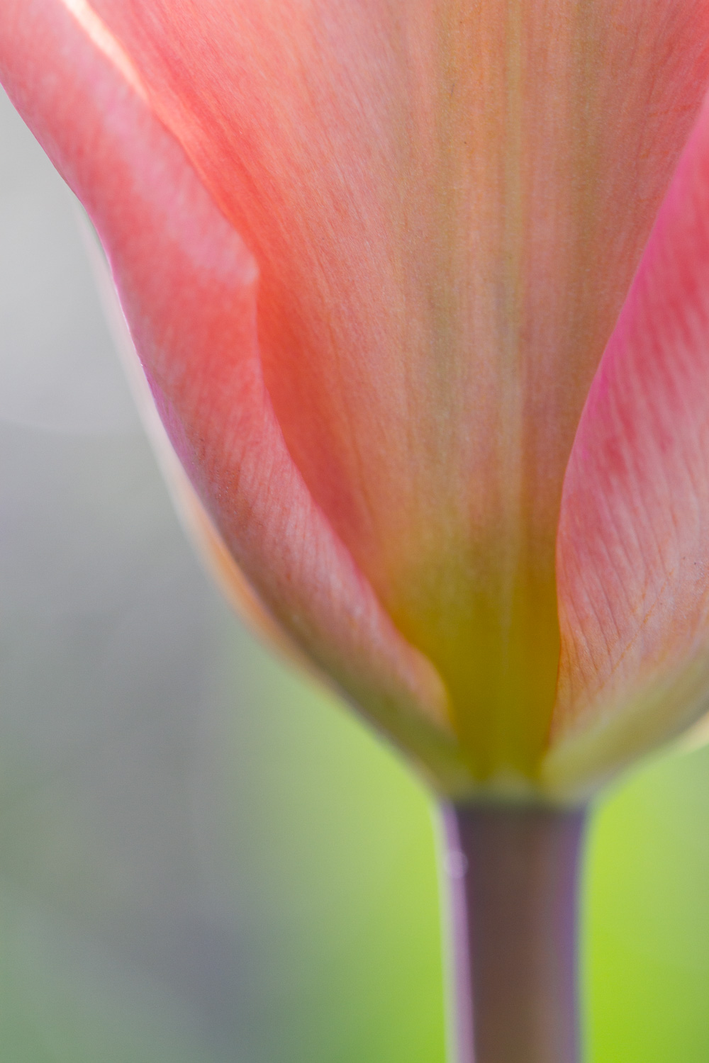 A Beginner's Guide to Stunning Close-Up Photography
