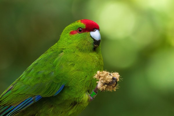 5 Tips for Better Forest Bird Photography