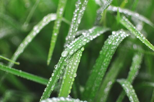 Weekly Photography Challenge – Rain
