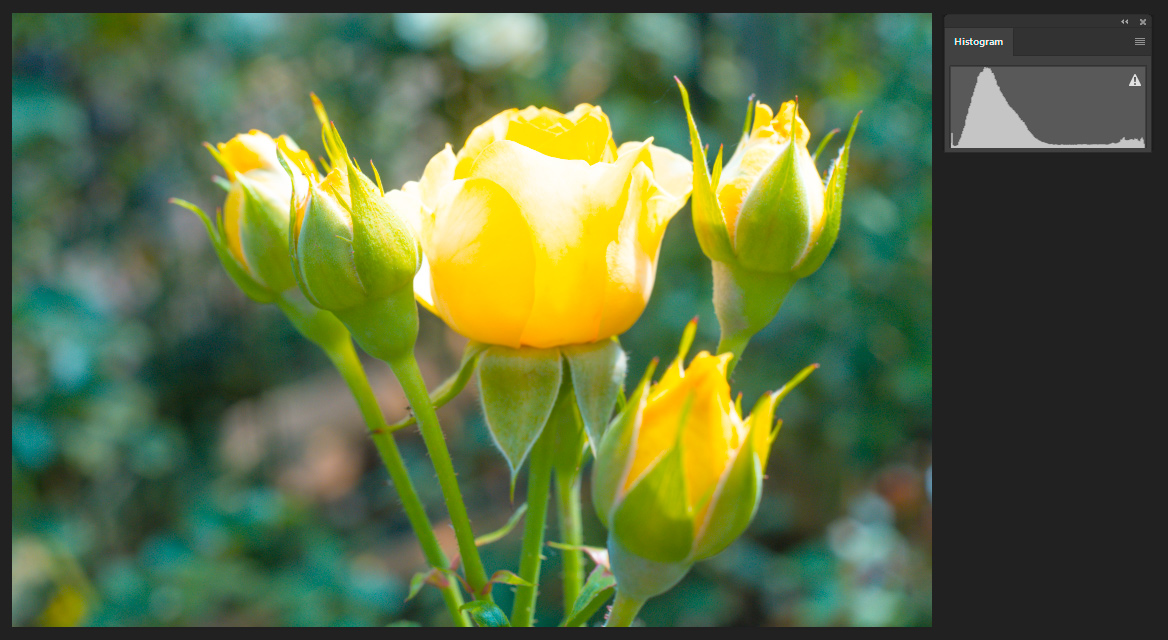 How to Make Well Exposed Photos Every Time Roses