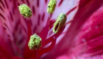 "Reverse Lens Macro – How to Make Macro Photos with ""Backward Thinking"""