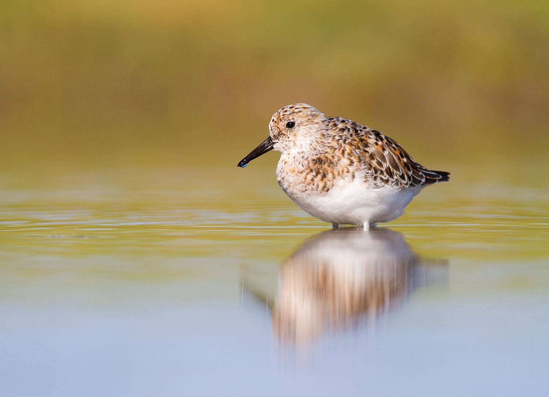5 Secrets for Stunning Creative Bird Photography