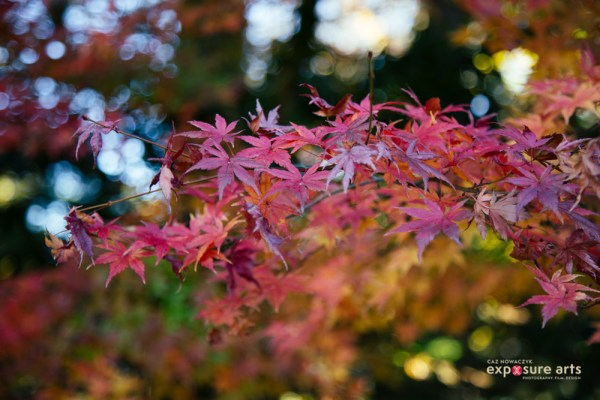 Weekly Photography Challenge – Autumn