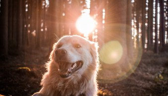 Weekly Photography Challenge – Dogs