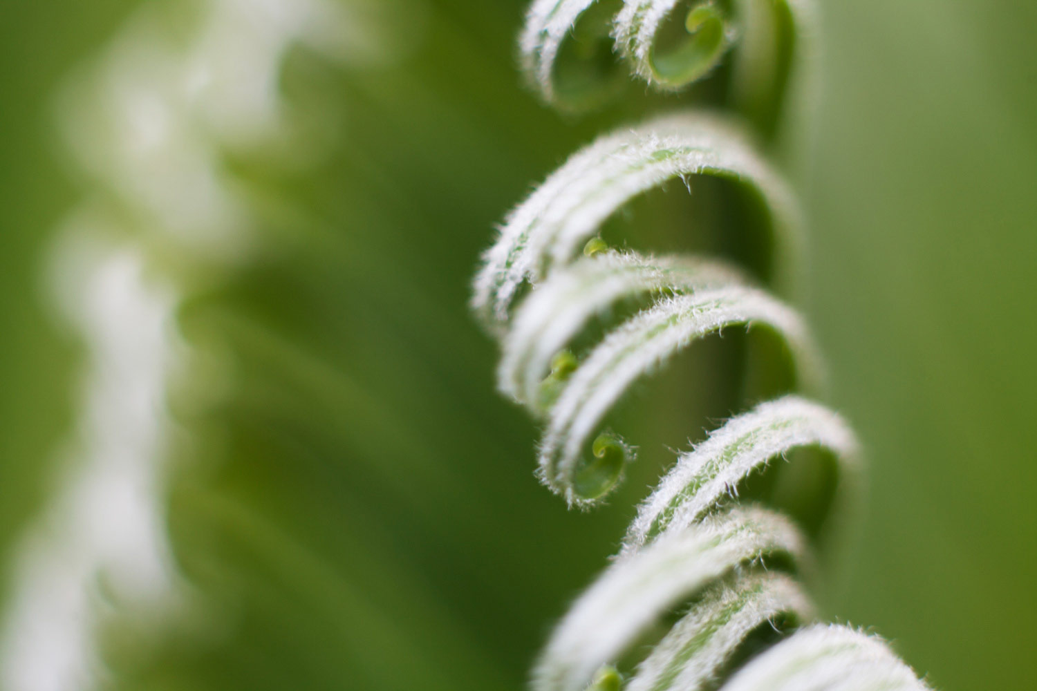 https://i2.wp.com/digital-photography-school.com/wp-content/uploads/2019/04/fern_curl_green.jpg?resize=1500%2C1000&ssl=1