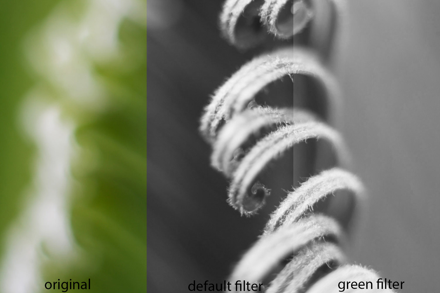 In black and white photography green filters are mainly used for photographing plants separating green foliage from brightly colored flowers