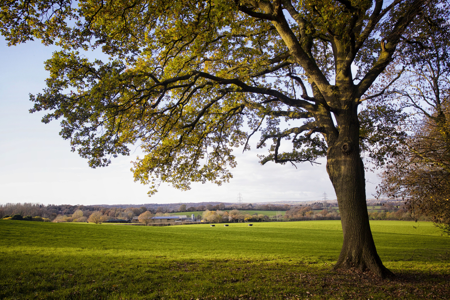 Image: A lone tree frames a typical landscape scene in southern England.