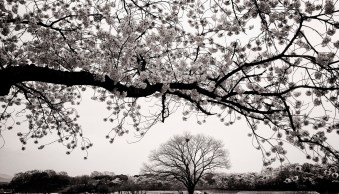 8 Creative Ways to Photograph Trees